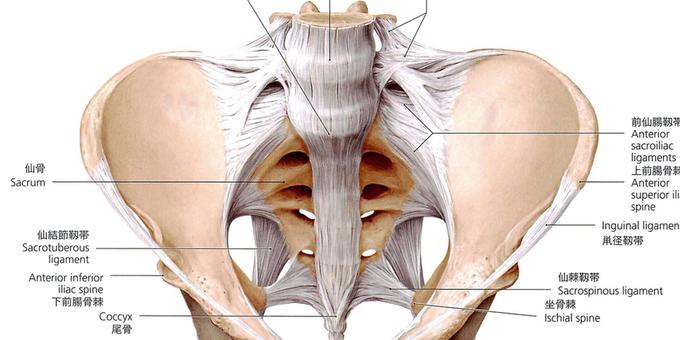 仙腸関節全面