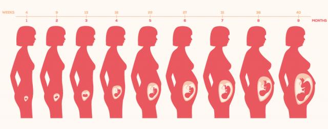 妊婦さんの体の変化