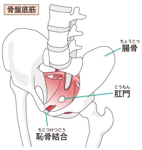 骨盤底筋、インナーユニット