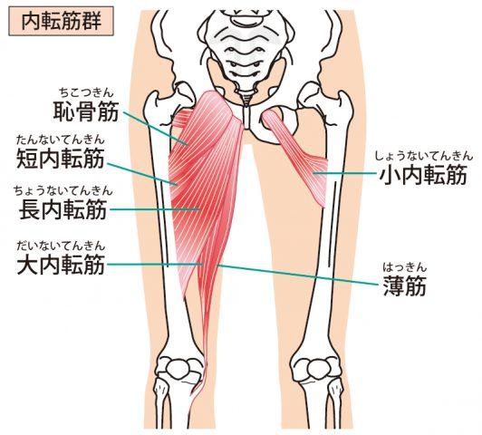 産後ケアのカギを握る脚の内側の筋肉(内転筋群)