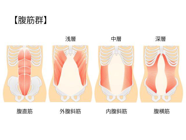 腹直筋、外腹斜筋、内腹斜筋、腹横筋イメージ
